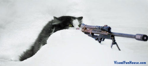 Sniper cat, this is one cat you don't want to mess with!