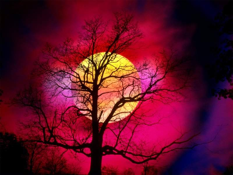 Beautiful Sunset behibd a tree