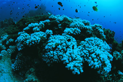 Coral bleaching is only a tangible aspect of global warming's effect on ecosystems