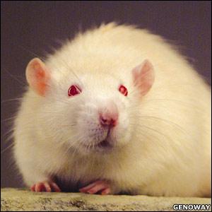 12. Ralph the Rat