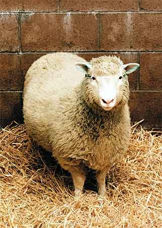 2. Dolly the Sheep