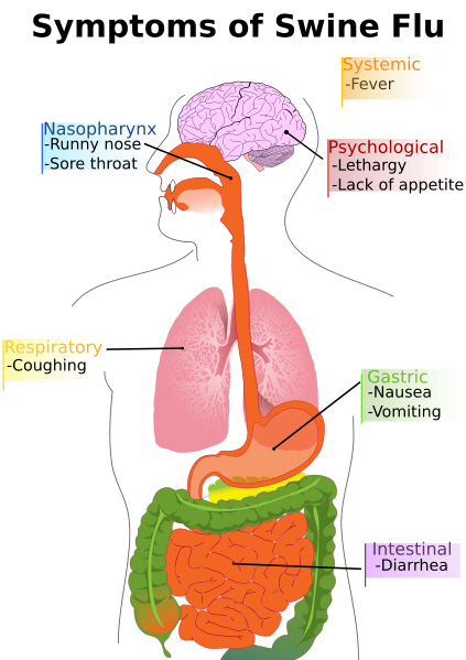 Main symptoms of swine flu in humans