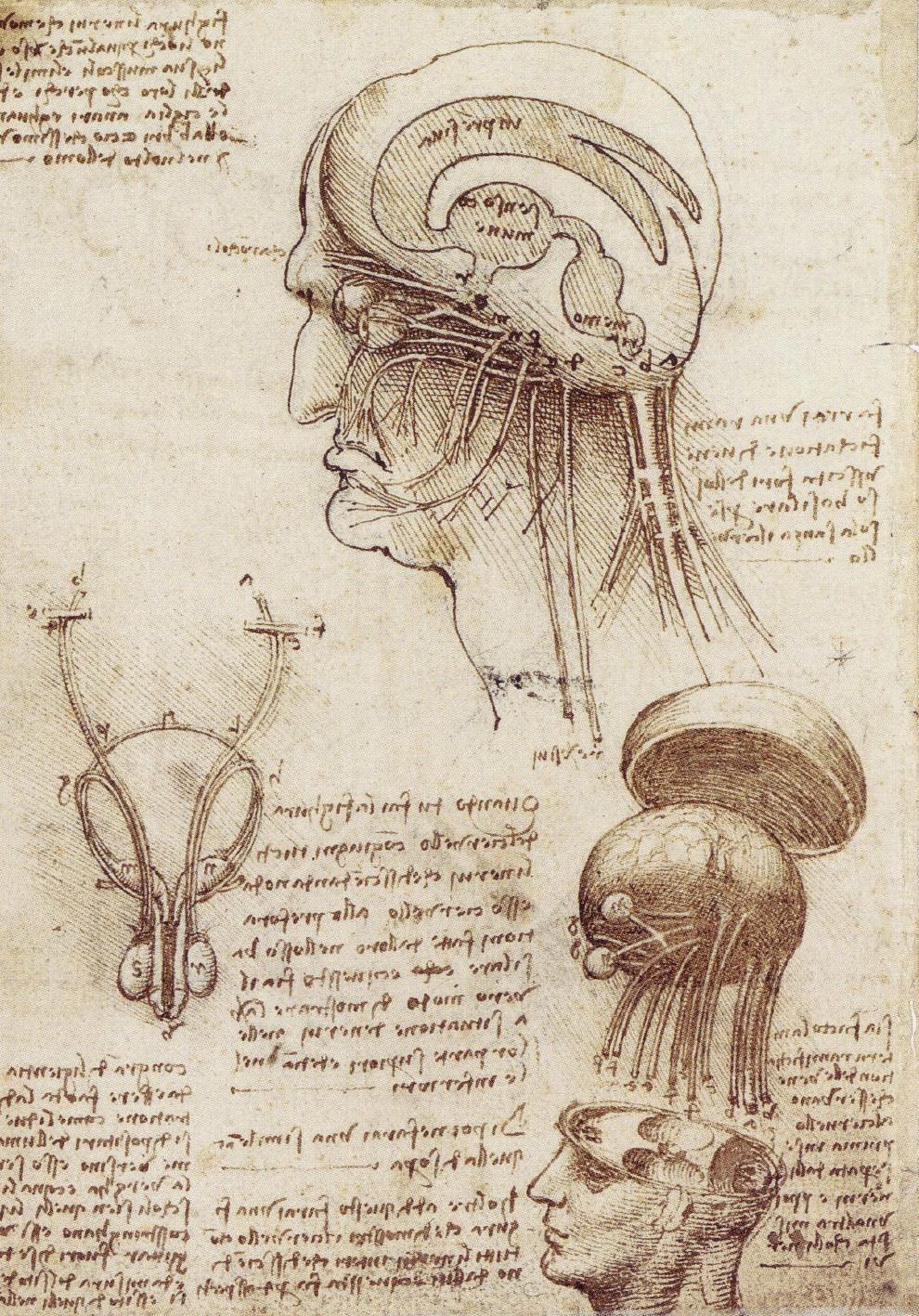 Study of Brain Physiology, c. 1508