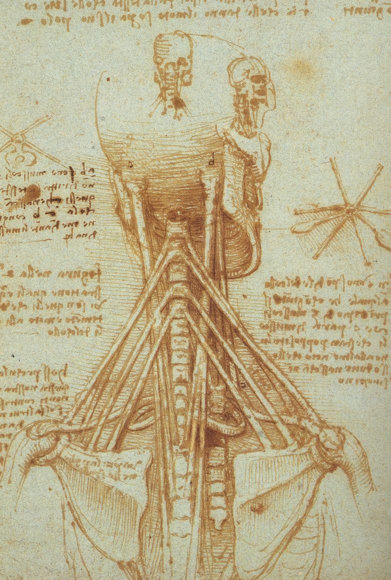 Anatomy of the Neck, c. 1515