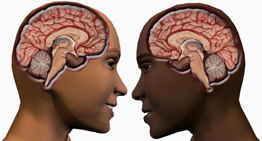 Male-Female Brain Differences